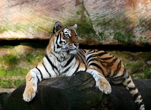 Tierpark17
