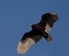 Catch A Wave (K. W. Sanders) Tags: sky nature birds animals geotagged canon20d alabama vulture turkeyvulture 1on1 birdinflight naturesfinest canon400mmf56l 123birds