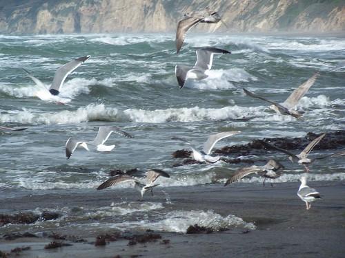 20070213 Sea Gulls
