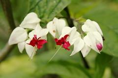 Flor singela (Bruno Confort) Tags: campodesobento suavidade florsingela