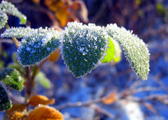 frost (T Sderlund) Tags: november autumn winter ice nature landscape leaf vinter scenery europa europe frost crystal sweden schweden herbst natur north norden skandinavien 2006 swedish blad 100views sverige 500views landschaft 800views 700views icecrystals 1000views landskap lv naturesfinest 333views bors frostyleaf 1100views frostonleaf icyleaf 1200views bygd iskristaller sandared sjuhrad exquisiteimage thesuperstarthebest iskristall superstarthebest borsbilder borsfoto borsbild borsfoton
