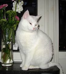 Laban in the window (Per Ola Wiberg ~ Powi) Tags: flowers cats pets 2004 window beautiful oneaday cat wow wonderful sweden stockholm priceless gorgeous 100v10f abc catalog sverige soe laban katt awesomeshot mostintresting catsaremyfriends abigfave 20commentsandup royalgroup flickrgold impressedbeauty flickrhearts superbmasterpiece beyondexcellence diamondclassphotographer flickrdiamond hairtasticcatsanddogs ultimatecrownofgreatness qualitypixels fabulousflicks flckrpets brilliantphotography awwwed~cuteadorablephotos animalsimages