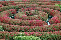 Garden by Getty.. (Julian E...) Tags: california flowers red flower green museum architecture clouds buildings garden losangeles tulips shapes getty umbrellas favoritegarden superhearts