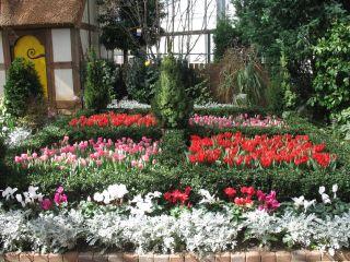 IMG_2940 tulip garden