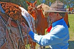 Dom Clavijo, o vaqueano (Eduardo Amorim) Tags: brazil horses horse southamerica brasil caballo cheval caballos cavalos pferde cavalli cavallo cavalo gauchos pferd riograndedosul pampa hest hevonen campanha brsil chevaux gaucho  amricadosul fronteira hst gacho  amriquedusud  gachos  sudamrica suramrica amricadelsur  sdamerika   americadelsud santavitriadopalmar  americameridionale wowiekazowie eduardoamorim