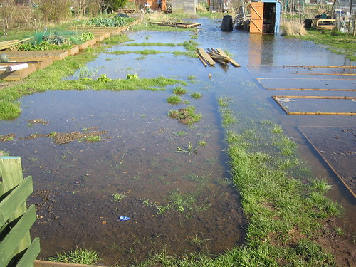 flooding in the allotment