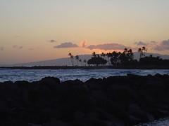 DSC00783 (jeremytheys) Tags: hawaii honeymoon waikikibeach honalulu