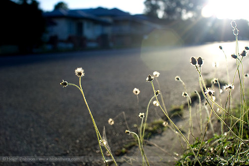 Weeds on my street