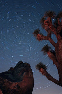 Starry Night at Joshua Tree