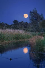 Moonrise over Wicken Fen (. Andrew Dunn .) Tags: uk blue trees england moon reflection water night reeds landscape twilight stream britain fullmoon willow moonrise nationaltrust fen cambridgeshire channel eastanglia moorhen thefens wickenfen interestingness16 i500 cy2 challengeyouwinner drainagechannel
