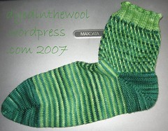 elodea 1st sock finished