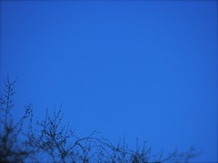 Blue sky background (Brian A Petersen) Tags: california blue trees winter wallpaper sky tree nature worship display background brian bp powerpoint ppt petersen bpbp brianpetersen brianapetersen