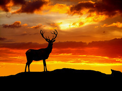 King of the hill (DUDZ007) Tags: nature animals bravo searchthebest sunsets outpost naturesfinest wonderworld magicdonkey outstandingshots worldbest shieldofexcellence colorphotoaward impressedbeauty superbmasterpiece wowiekazowie diamondclassphotographer flickerdiamond