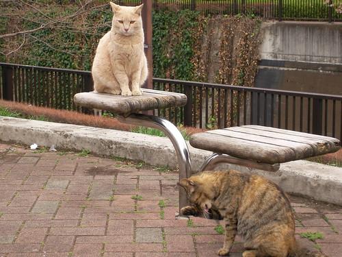 あたしは人を見下していないわよ。これが、あたしの立ち位置なの。あたしより下にいるあんたがいけないのよ。ちょっと、顔を洗っている場合じゃないでしょ