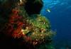 Nudibranco. Nudibranch. (omar.flumignan) Tags: nudibranch nudibranco underwater sotacqua dive immersione lampedusa mediterraneo italia italy mare sea canon g7xmk2 fantasea fg7xmk2 ikelite ds51 mobydiving flickrtravelawards allnaturesparadise