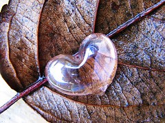 Winter (C.Mariani) Tags: winter leave glass bravo december heart sparkle mycreation abigfave artlibre impressedbeauty flickrplatinum isawyoufirst