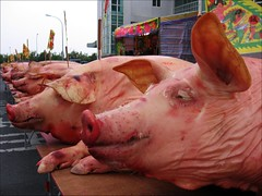 dead pigs with joss sticks stuck on their heads (hey-gem) Tags: animal table dead religious pig scary chinese taiwan pigs offering bloody tainan cultural josssticks mortality gory misadventuresintaiwan jiangjyunfish122806 將軍漁港