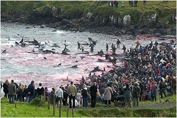 Kinship Circle - 2006-12-27 - 01 - Whale Slaughter