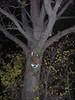 12/17/06: Tree