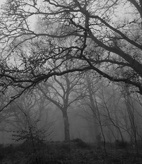 Ghostly Photographer in the Creepy Forest (Magdalen Green Photography) Tags: blackandwhite bw forest scotland photographer ghost scottish eerie