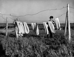 Two women airing wool on a line before spinning (John Collier Jr.) Tags: blackandwhite bw usa history classic film museum america vintage collier us photographer unitedstates propaganda wwii documentary patriotic roosevelt historic professional worldwarii 1940s archives maxwell ww2 americana civildefense patriotism archival forties largeformat anthropology homefront worldwar2 40s fsa wartime newdeal owi waryears farmsecurityadministration officeofwarinformation johncollierjr