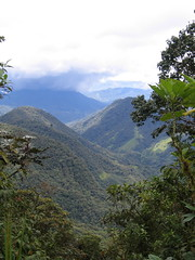 Cloudforest view