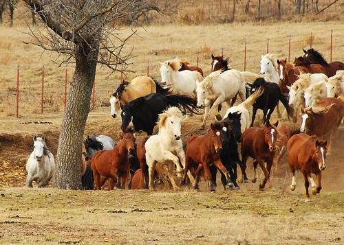 whildhorses1