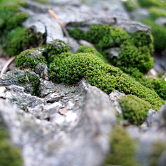 The Secret Life of Moss (Shari Diane) Tags: macro tree green nature forest square moss bokeh bark abigfave