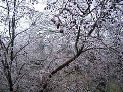 Ice Storm 2007 - 3