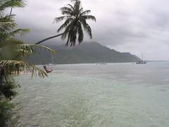 Swinging in Tahiti