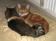 Ahhhhhhhh! (Eisbeertje) Tags: cats animal animals cat katten kat gato gata toni katze dieren dier katzen poes poezen tier beertje tieren cc100