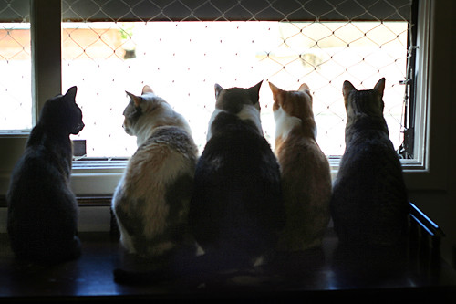 cat meeting