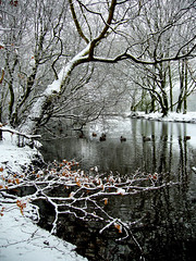 (on islands) Tags: uk winter england snow london unitedkingdom britain dreams 2007 trentcountrypark 1on1naturephotooftheday 1on1naturephotoofthedayfeb2007