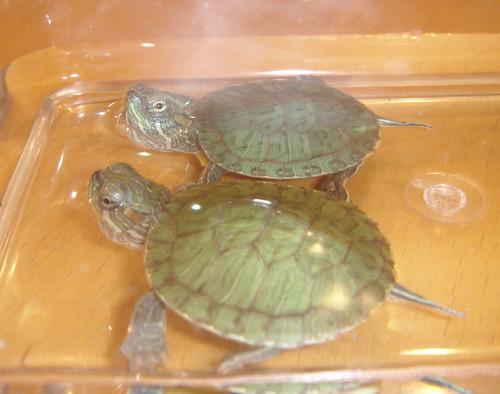 Beautiful Turtles.jpg