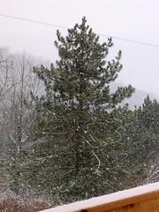 Snow--again