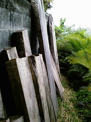 Wood from hurricane (MrTree) Tags: garden grenada thelodge
