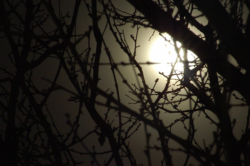 branches under the moon