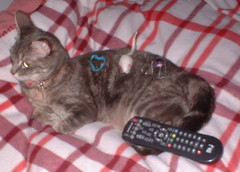 cat toys & TV remote on Xena