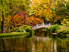 Moon Bridge in the Fall (starrise) Tags: bridge autumn fall 1025fav landscape japanesegardens fortworthbotanicgardens favoritegarden