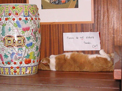 chinese cat (illumeo) Tags: 2005 amsterdam cat