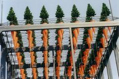 Expo 2000 Pavilion - Estonia (WrldVoyagr) Tags: tree germany deutschland estonia 2000 expo hannover exposition carrot pavilion hanover worldsfair eesti worldfair estland expo2000