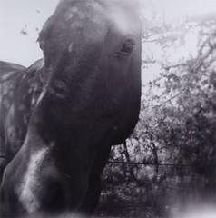 pferd - by futurowoman