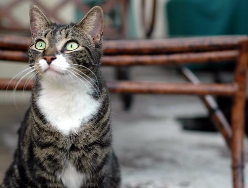 kitten, again