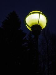 Street Light (Gatelykt) (Åsta) Tags: tree yellow night dark streetlight lamppost lys tre scavengerhunt natt gul mørk gatelys lykt challengeyouwinner impressedbeauty gatelykt