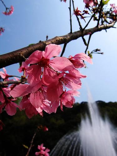 陽明山花季遊039
