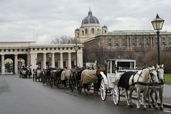 Horses at Heldenplatz (Heroe's Square), just outside the Hofburg Imperial Palace