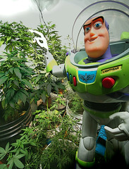 Buzz Grown (professional recreationalist) Tags: green bag buzz ma j stash weed fattie jay russell toystory tea outdoor smoke humor bob indoor humour disney pot hydro pixar shit oil thc lightyear shake mayo gram bud dope brucedean professionalrecreationalist marijuana roach skunk doobie pound hash blunt homegrown herb sneaky maryjane cannabis joint medicinal chronic nard tar lid reefer hooter sativa hemp hashish charas marihuana ganja muggles trimmings pinner splif ounce indica locoweed bcbud twistie bhang gatewaydrug kannabis puttyhash mafen gigglestick
