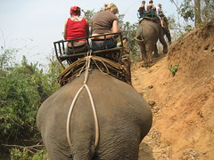 Culo de elefante