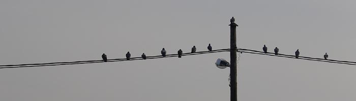 birds - putni