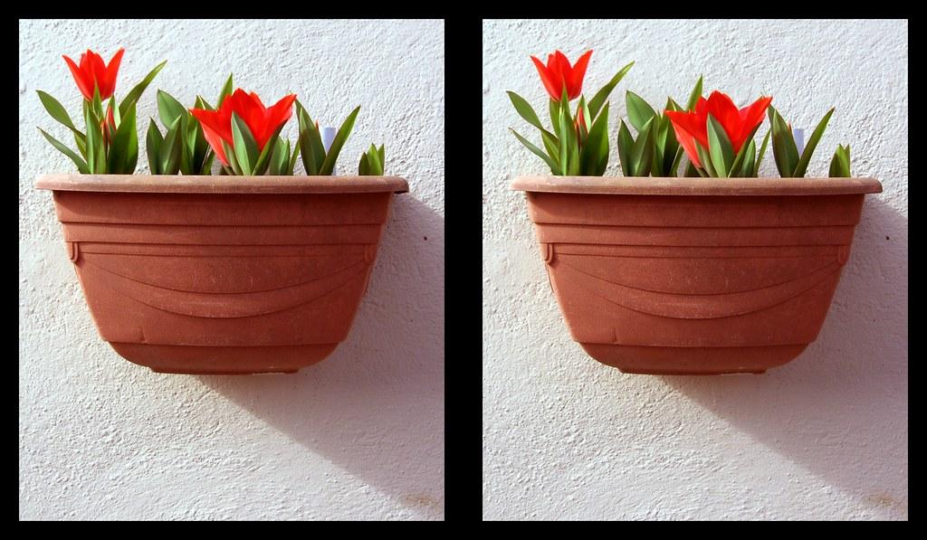 Balliolman Flower Pot X